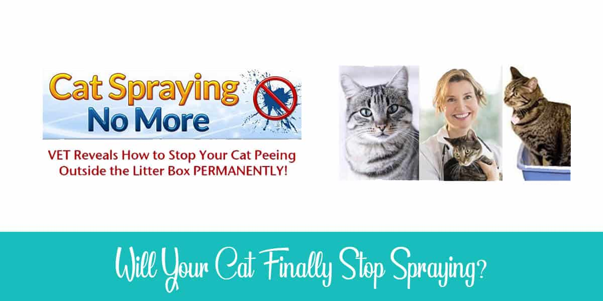 Will your cat stop this inappropriate spraying all over the house?