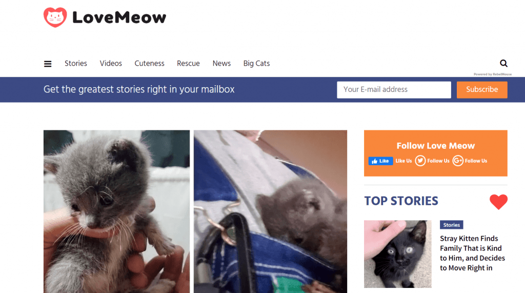 Love Meow cat blog