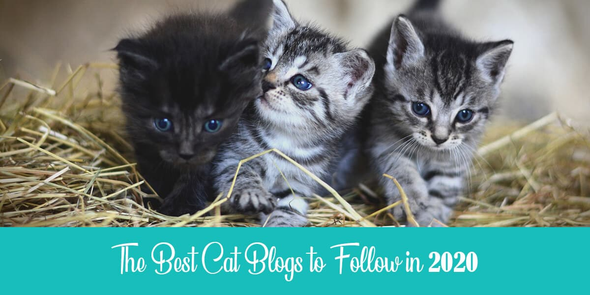Best cat blogs to check out in 2020