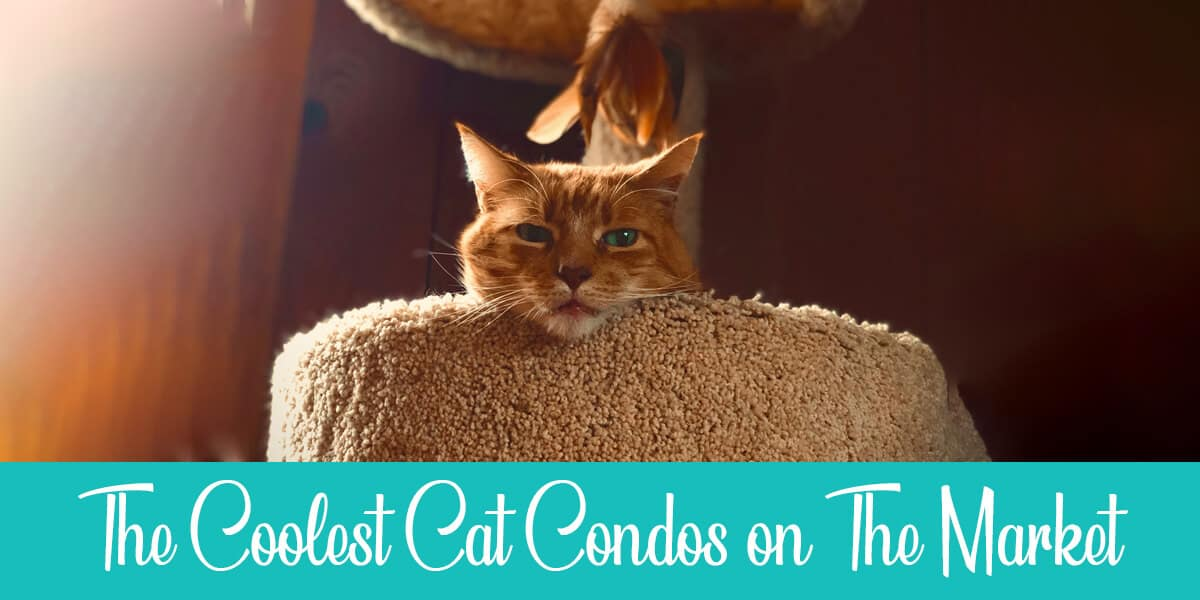 Cool cat condos to buy in 2020