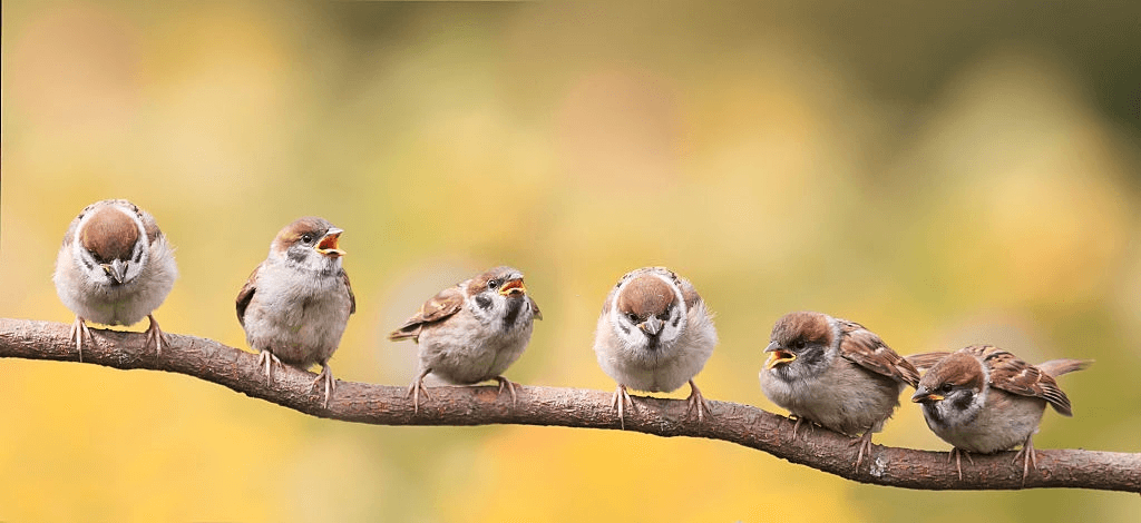 Birds on a tree branch in the wild