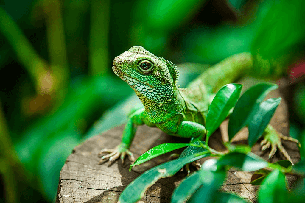 A reptile called water dragon