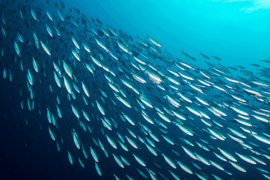 some fish swimming in a group
