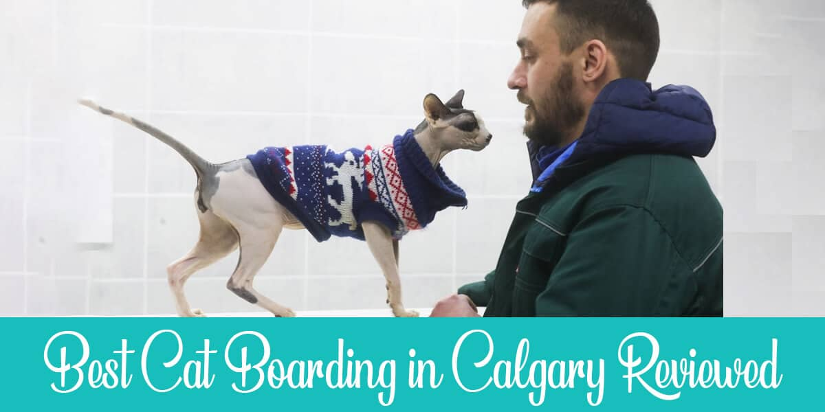 Best facilities for cat boarding in Calgary