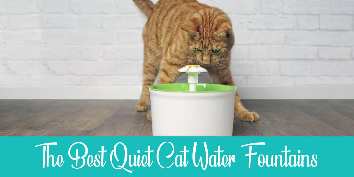 The top quiet cat water fountains in 2020