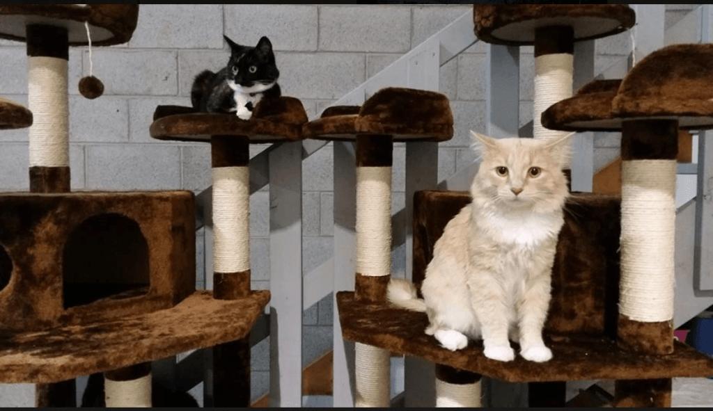 Cozy Kitty Accommodations