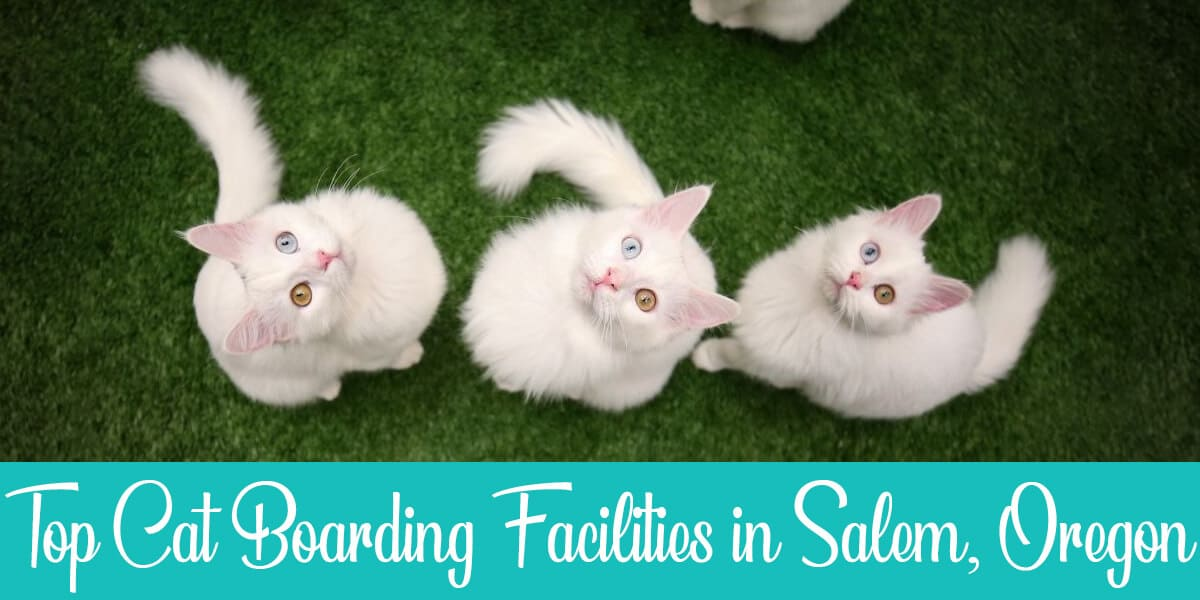 The Best Cat boarding in Salem: Top 3 Facilities Reviewed