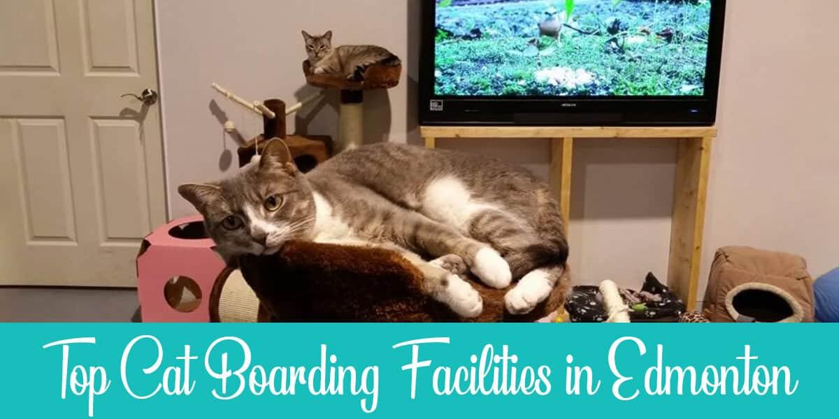 The Best Cat Boarding in Edmonton Reviewed (2021)