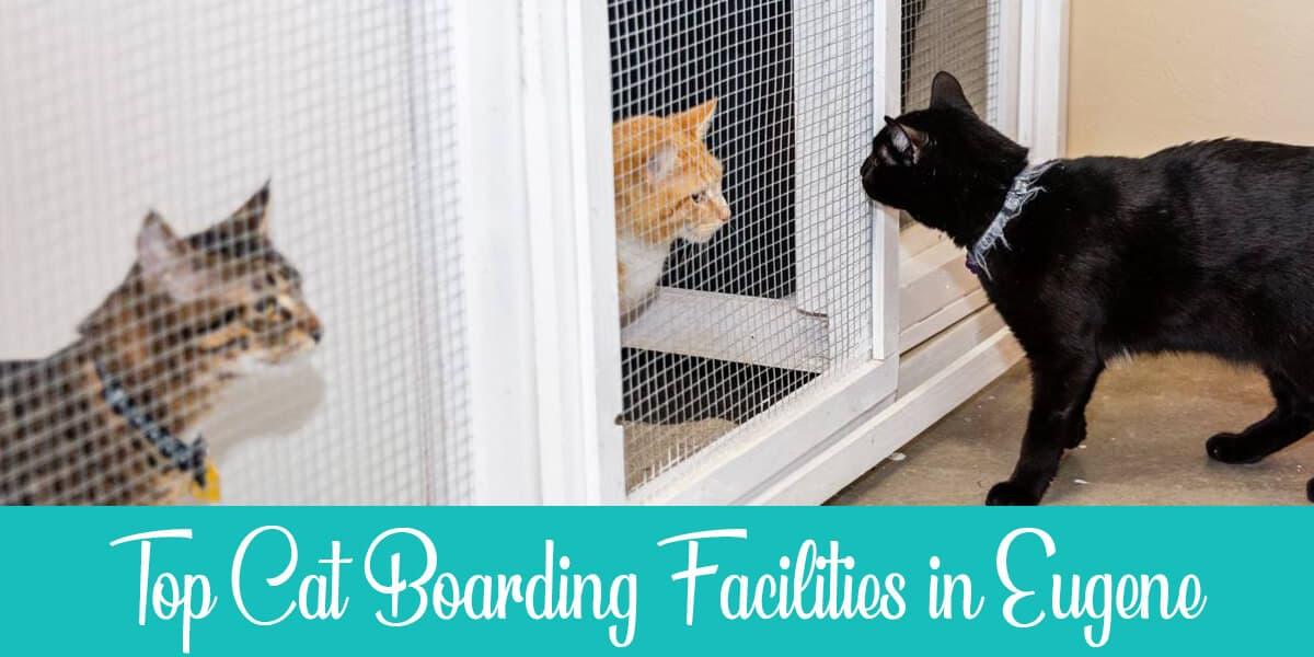 Best Cat Boarding in Eugene: Top 3 Facilities