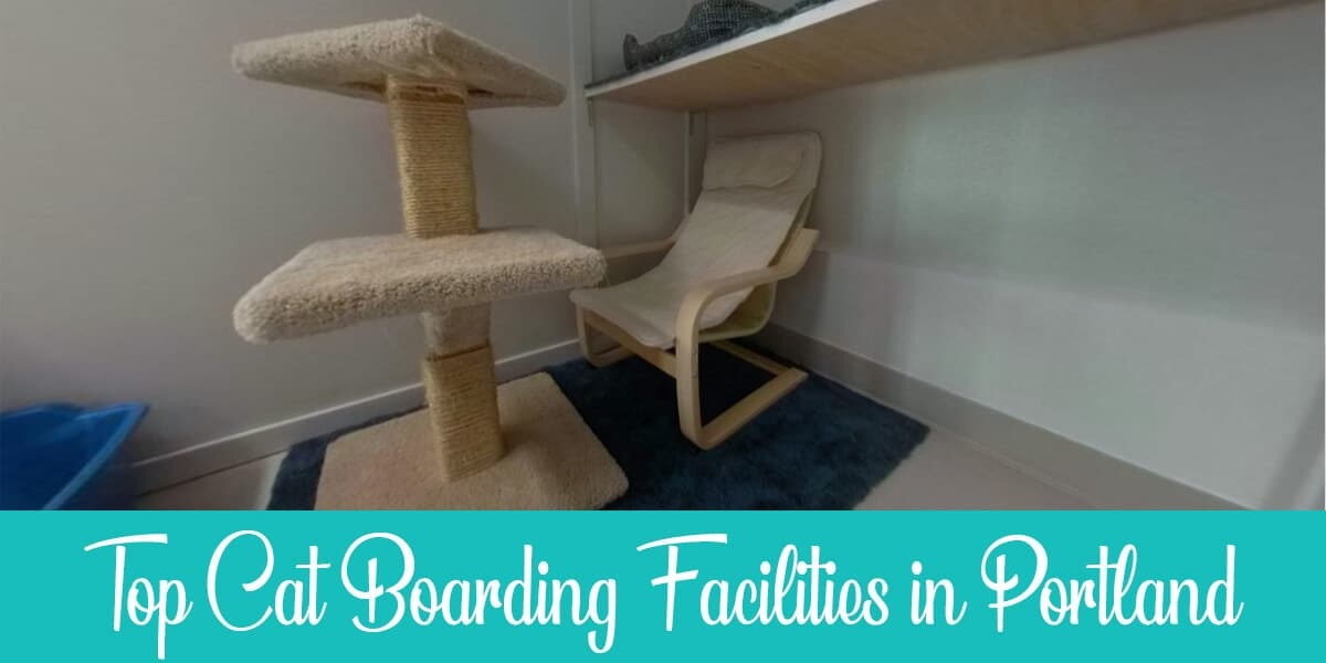 Cat boarding in Portland: The best 3 facilities reviewed