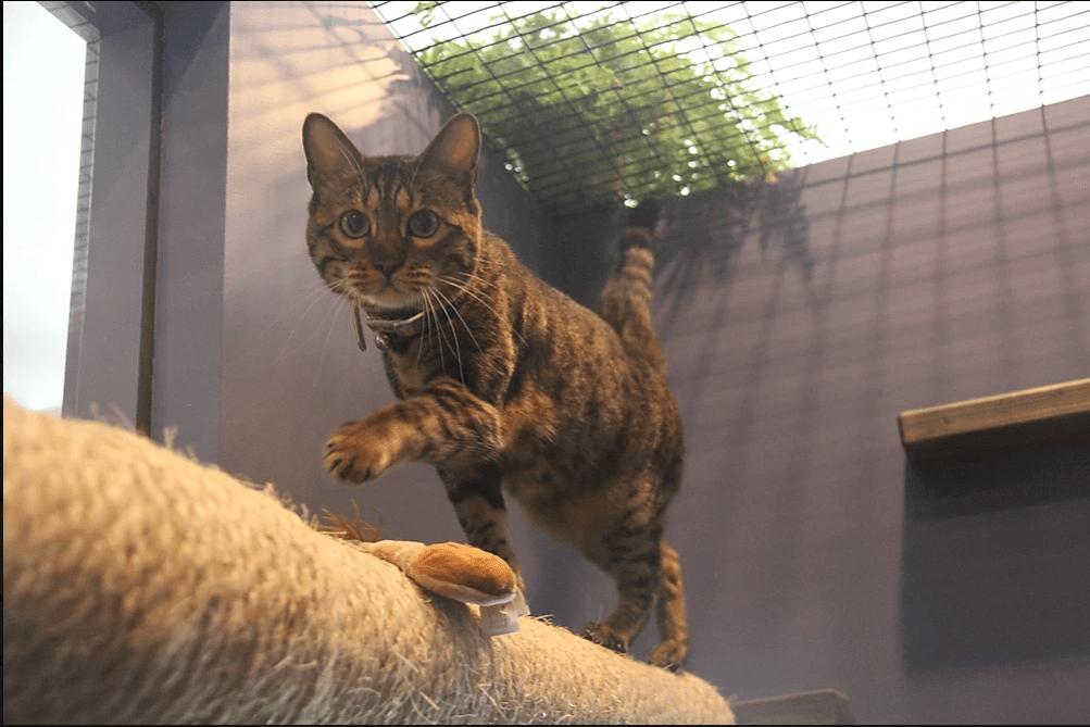 Kitty Chateau