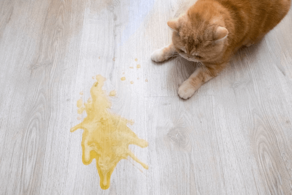 How to Find Cat Pee