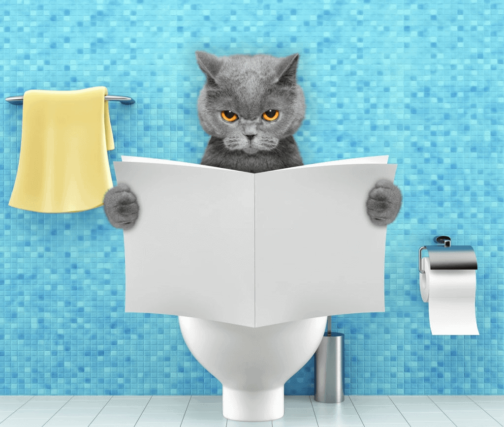 How to make your cat pee in the correct place
