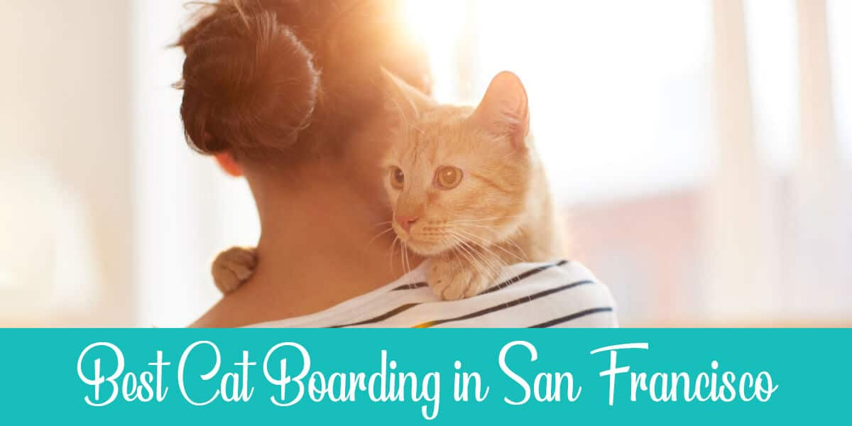 Cat Boarding in San Francisco – Best 4 Services