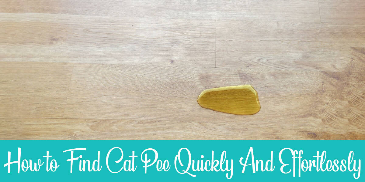 How to Find Cat Pee Quickly And Effortlessly