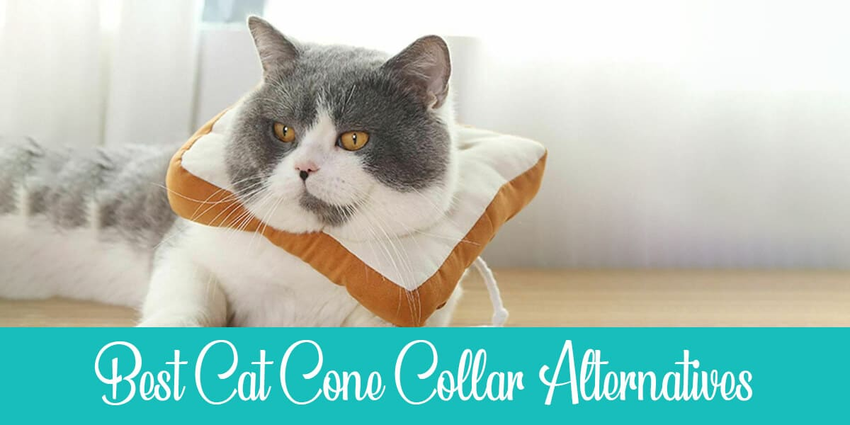 The Best 3 Cat Cone Collar Alternatives (+ DIY Guide)