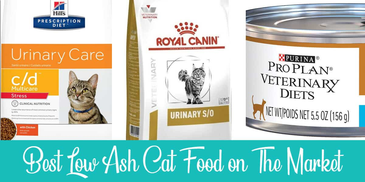Best Low Ash Cat Food on The Market in 2020
