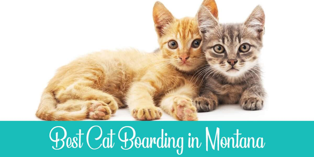 Top 3 Facilities for Cat Boarding in Montana Reviewed