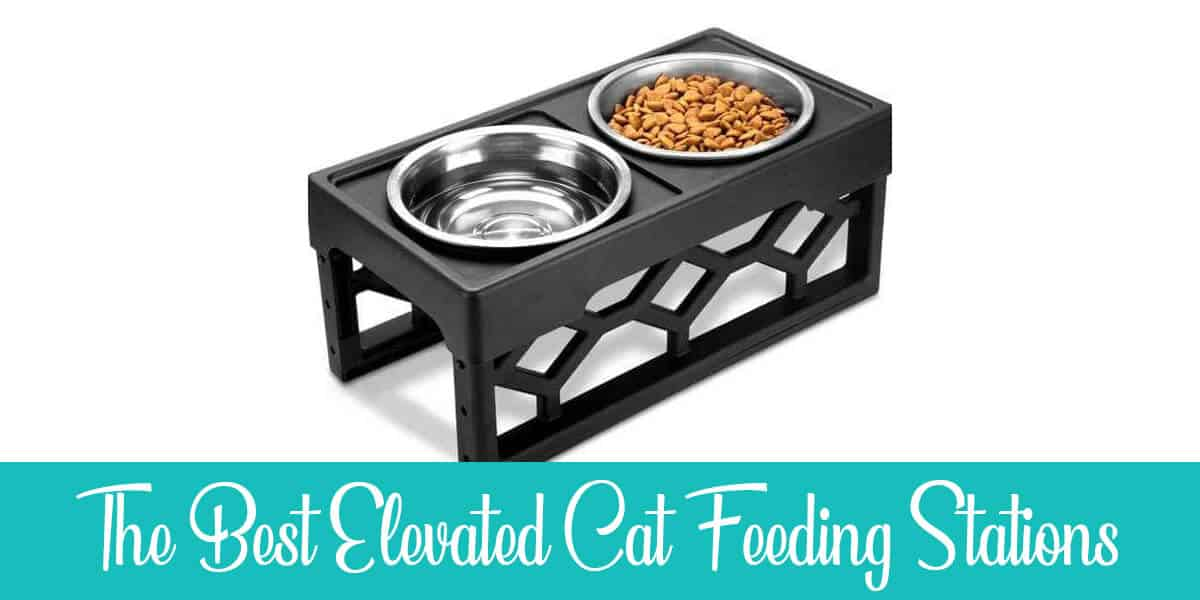 The Best Elevated Cat Feeding Stations