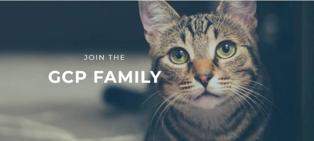 Garden City Pets - Top Cat Boarding Facility in Montana