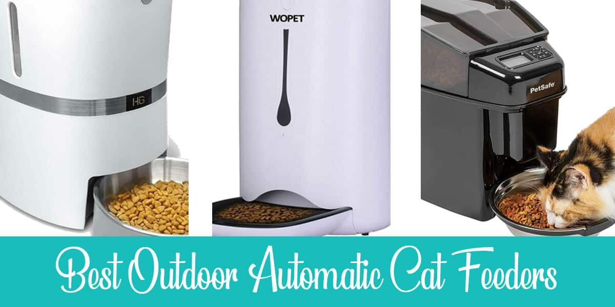 Best Outdoor Automatic Cat Feeders Reviewed (2020)