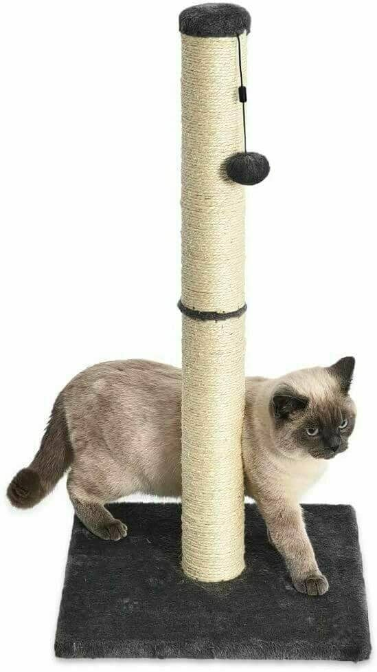 AmazonBasics-Medium-Cat-Scratching-Post-–-Best-Budget-Buy