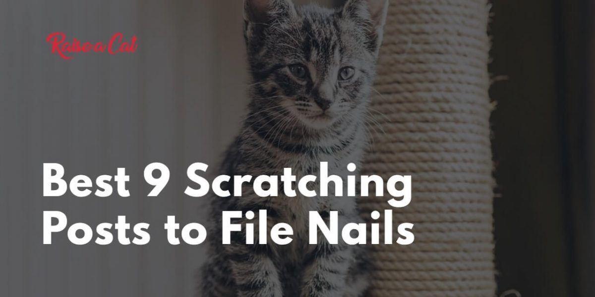 The 9 Best Cat Scratching Posts to File Nails (Reviews)