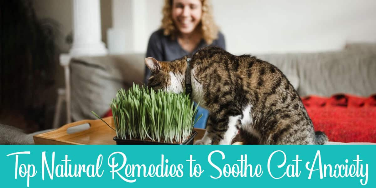 5 Cat Anxiety Natural Remedies You'll Likely Find at Home