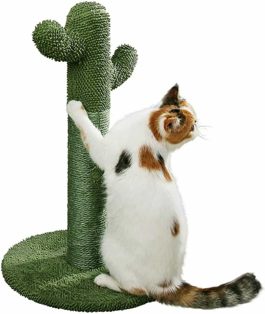 PetnPurr Cat Scratching Post with Teaser Ball