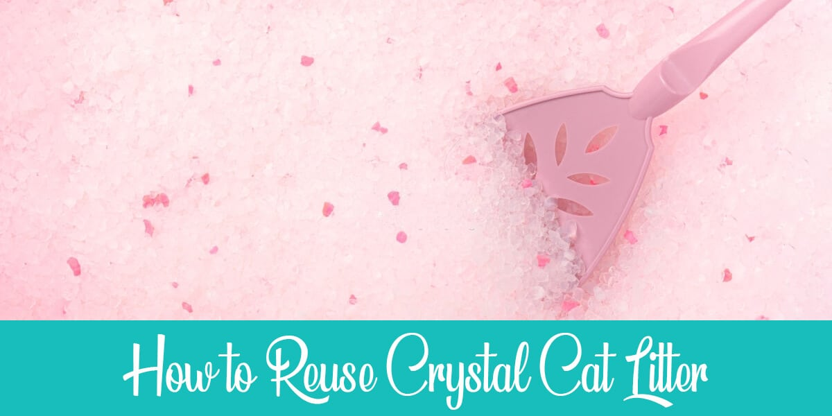 How to Reuse Crystal Cat Litter: 3 Simple Ways