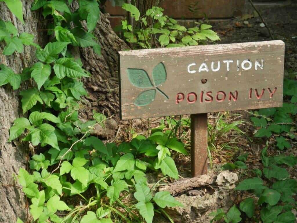 Poison Ivy caution