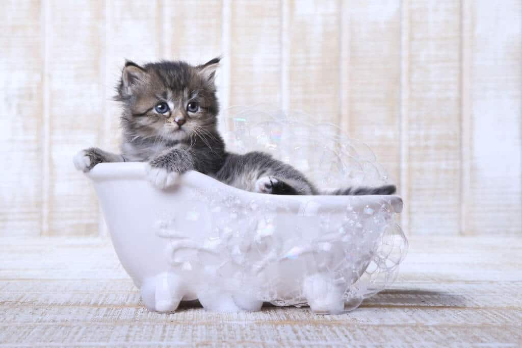 What's the Best Way to Bathe My Cat?