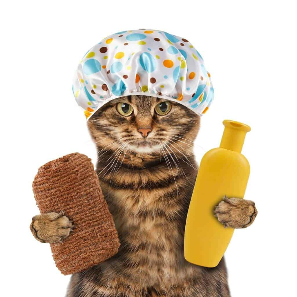 How to Make Cat Shampoo at Home?