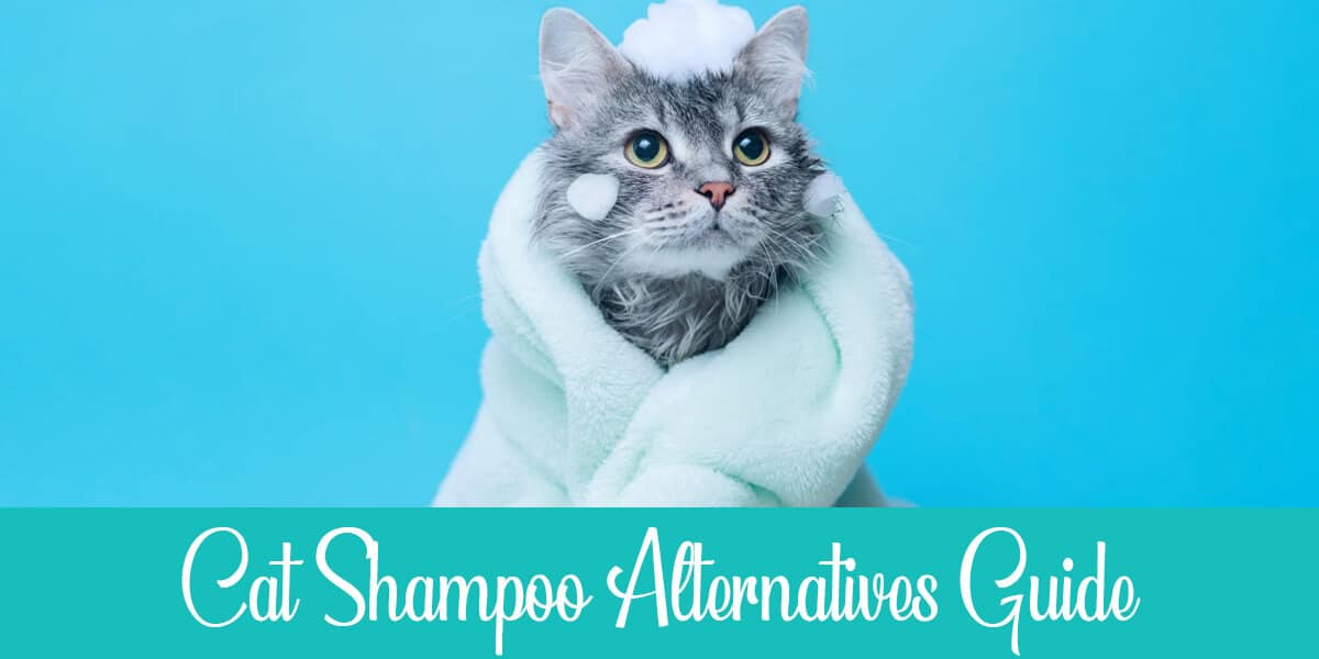 Cat Shampoo Alternatives