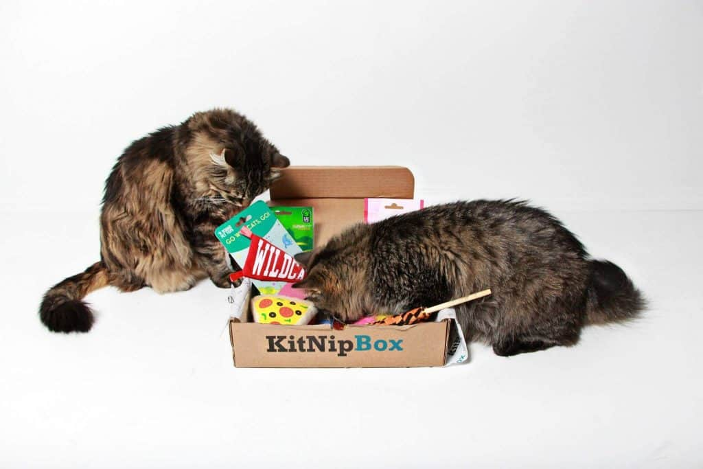 KitNipBox for multiple cats