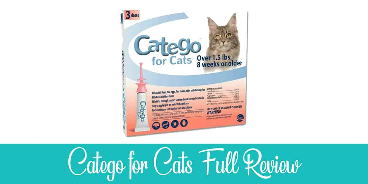 Catego for Cats Review