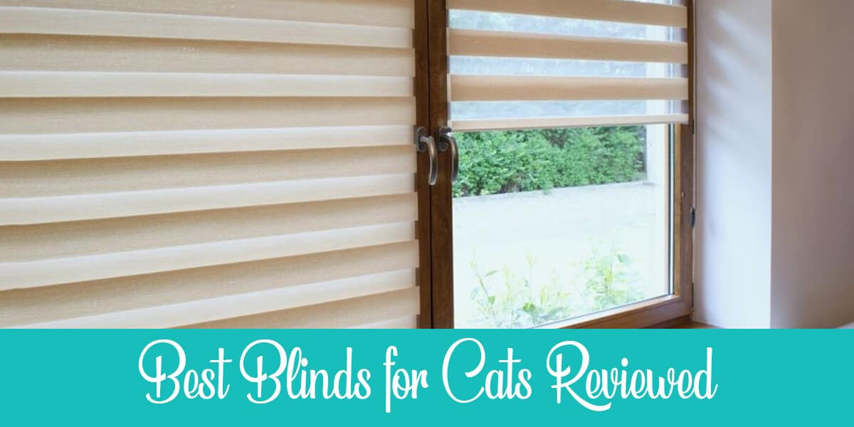 Best Blinds for Cats
