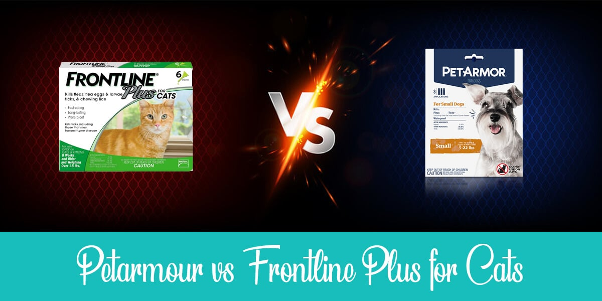 Petarmour vs Frontline Plus for Cats
