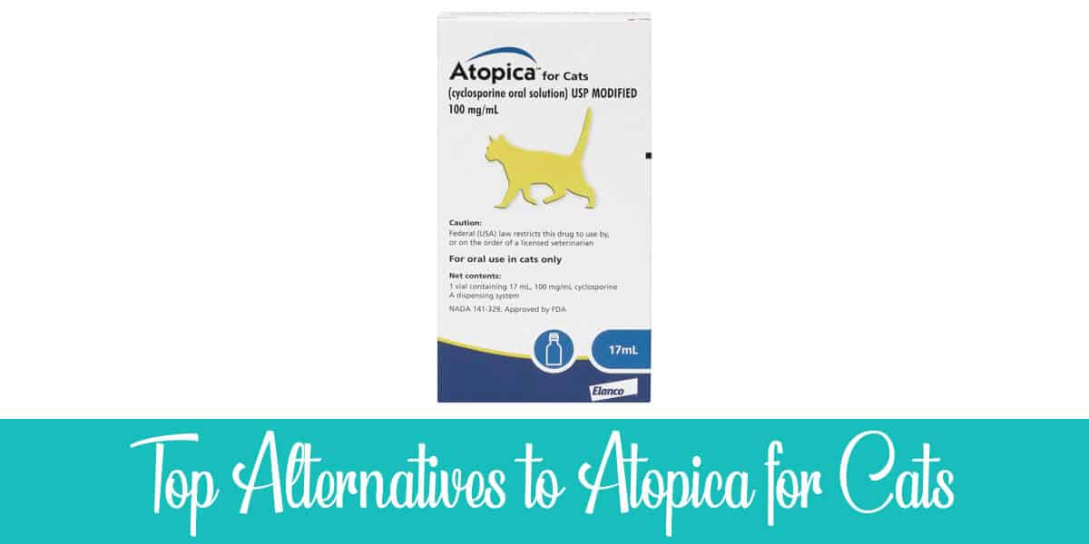 Alternatives to Atopica for Cats
