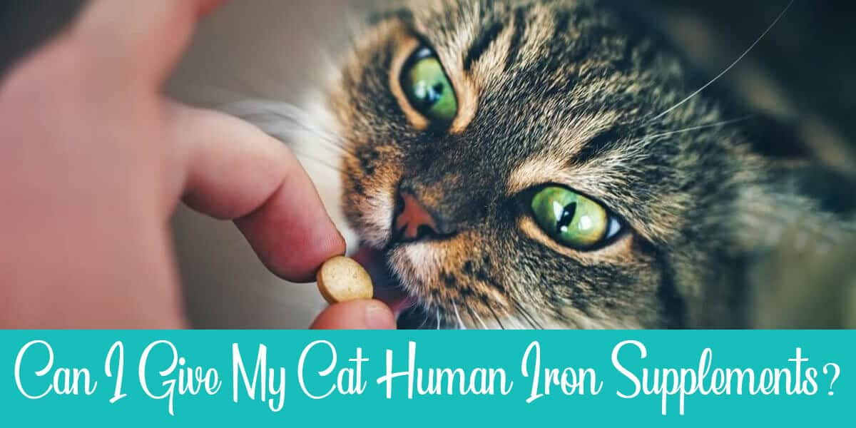Can I give my cat human iron supplements?