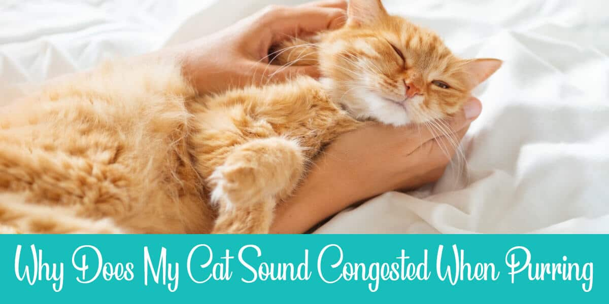 Cat Sounds Congested When Purring