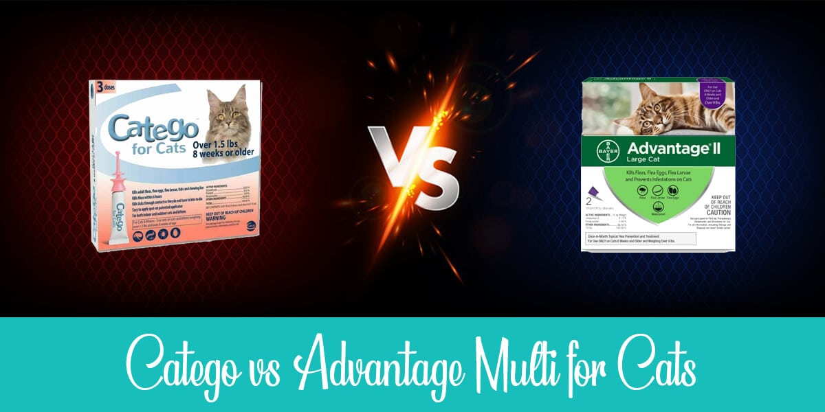 Catego vs. Advantage: Which Treatment Would Eliminate Fleas?