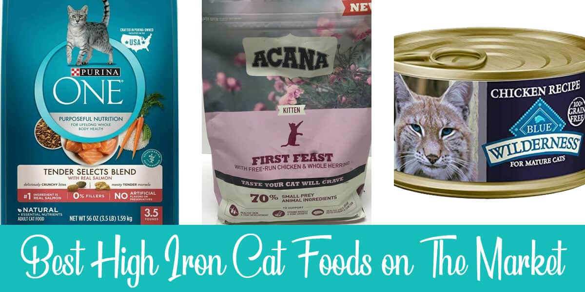 3 Best High Iron Cat Foods: Reviews and Buyer's Guide