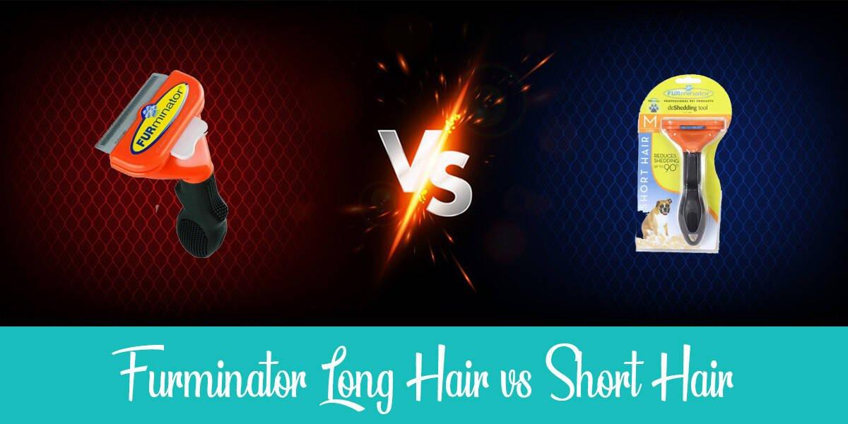 Furminator Long Hair vs Short Hair: The Full Guide