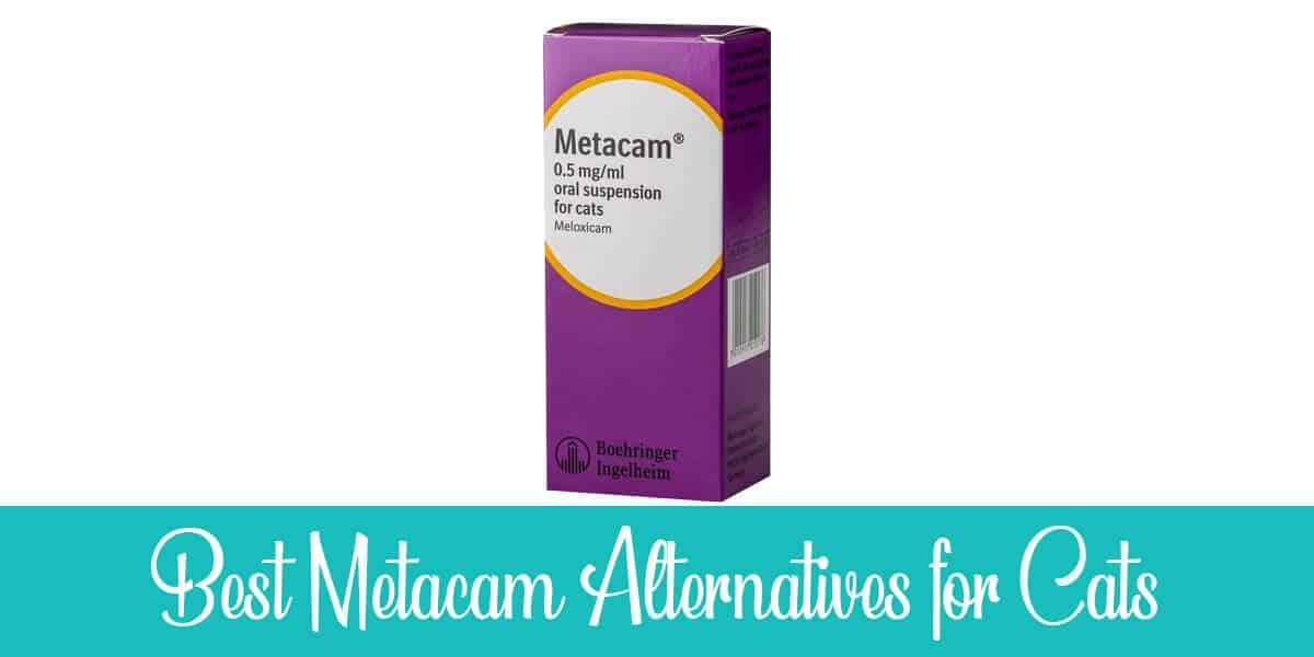 Alternatives to Metacam for Cats