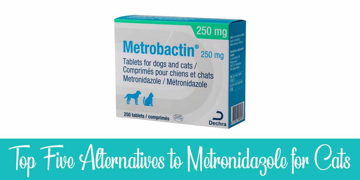 Alternatives to Metronidazole for Cats