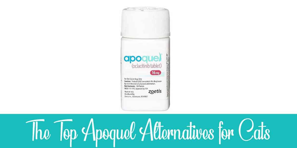 Apoquel Alternatives for Cats