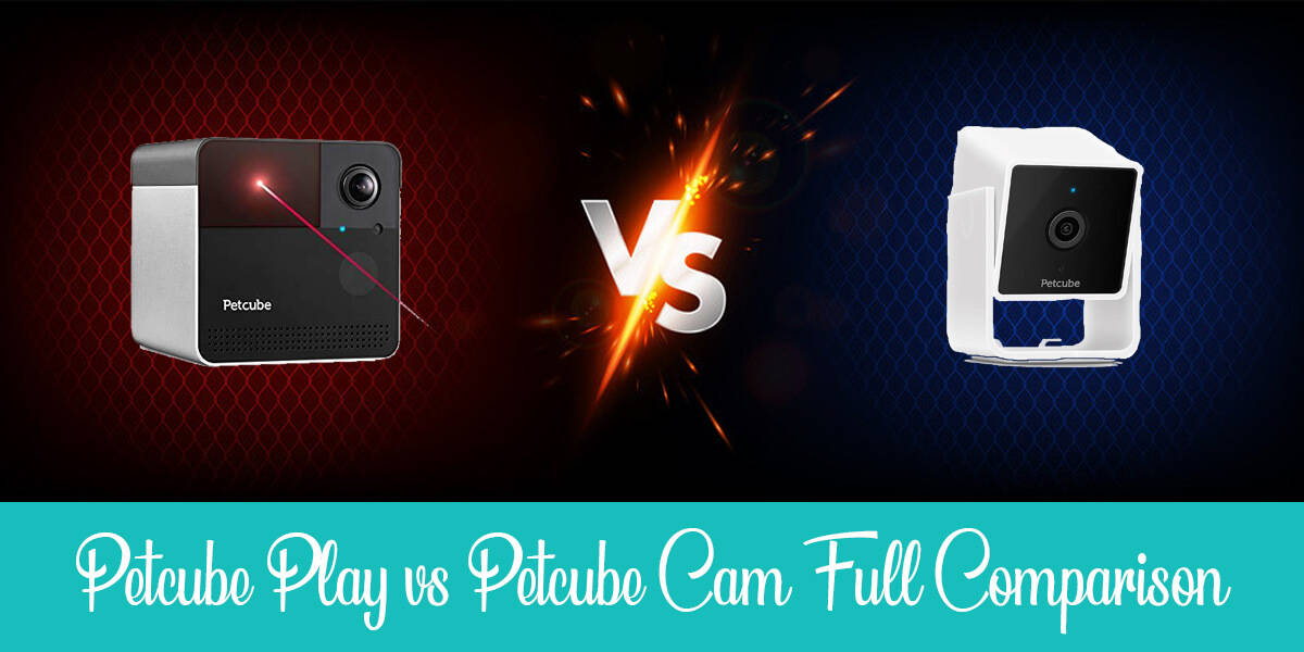 Petcube Cam vs. Petcube Play: What's The Difference?