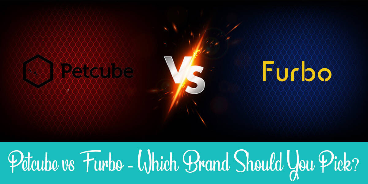 Petcube vs Furbo For Cats: What Are the Differences? (2021)