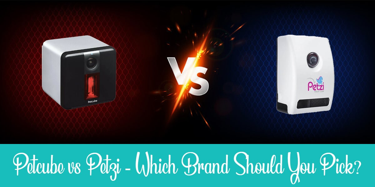 Petzi vs Petcube: Which Is Better for Your Cat?